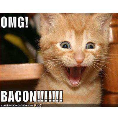 bacon kitty