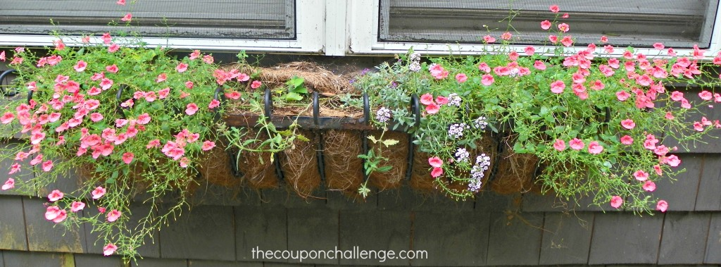 Window Box Before